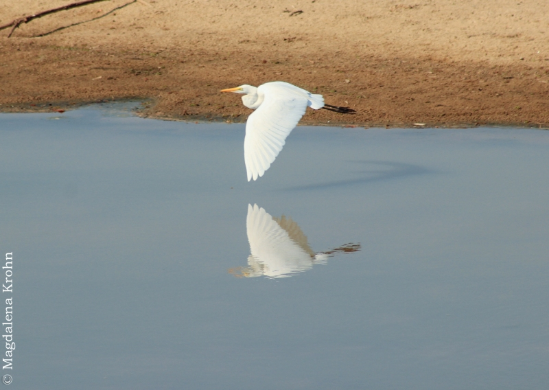 bird_reflection1