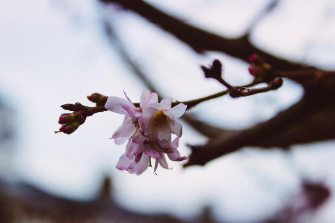 WinterBlossoms-2