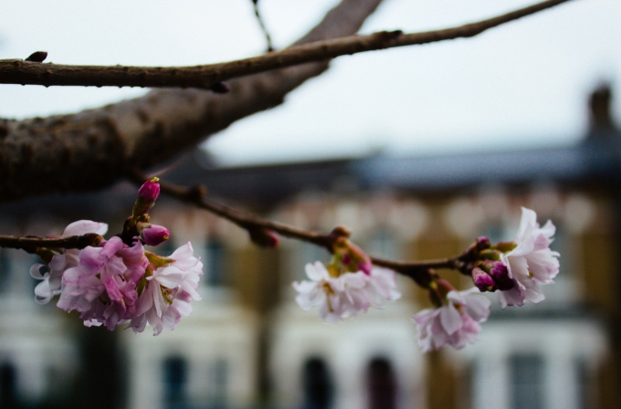 WinterBlossoms